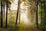 Schotterweg durch den Wald, Odenwald, Hessen, Deutschland