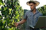 Young man in vineyard holding laptop