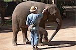 Cornac et éléphant, Thai Elephant Conservation Center, Lampang, Province de Lampang, Thaïlande du Nord, Thaïlande