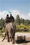 Touristes équitation d'éléphant, Thai Elephant Conservation Center, Lampang, Province de Lampang, Thaïlande du Nord, Thaïlande