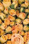 Roses à Pak Klong Talat marché, Bangkok, Thaïlande