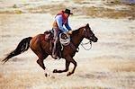 Cowboy Reiten auf Pferd, Wyoming, USA