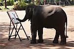 Formateur aident Elephant peinture sur toile, Thai Elephant Conservation Center, Lampang, Thaïlande
