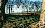 Beech trees cast long winter shadows at Batworthy,near Chagford.