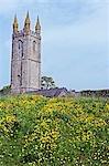 Renoncules en face de l'église Widecombe-dans-le-Moor, Dartmoor
