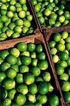 Boxes of limes,Oxkutzcab Market,Yucatan