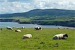 UK,Wales,Pembrokeshire. View towards Newport Bay from Dinas Head and the Pembrokeshire Coastal Path.
