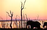 Elephant on shore of Lake Kariba.