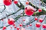 Rote Weihnachtskugel im freien am Baum hängen