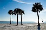 Palmen am Strand, Hernando Beach, Florida, USA