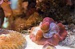 Aquatic Animals, Tampa Aquarium, Tampa, Florida, USA