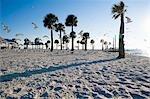 Mouettes sur la plage, Hudson Beach, Florida, USA