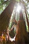Frau Wandern durch einen Wald von Old Growth Redwoods, in der Nähe von Santa Cruz, Kalifornien, USA