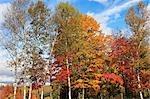 Montreal im Herbst, Quebec, Kanada