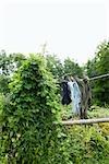 Chaussettes de séchage sur corde à linge