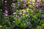 Crystal Springs Rhododendron Garden, Portland, Oregon, USA