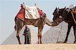 Homme avec le chameau et le cheval devant les pyramides, Giza, Égypte