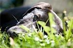Close-up of Black Labrador Retirever Puppy