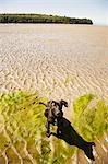 Portrait du Labrador Retriever Cross chiot à la plage à marée basse