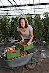 Une femme de cageots de tomates fraîches dans une serre d'empilage