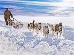 Course de traîneau de chiens