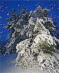 Mid April Snowfall on Trees, Ottawa, Ontario, Canada