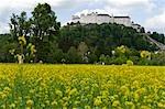 Hohensalzburg Castle und Vergewaltigung Field, Salzburg, Österreich