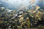 Fish in Aquarium, Tampa Aquarium, Tampa, Florida, USA