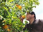 Man sniffing orange from tree