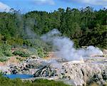Vapeur qui s'élève dans la réserve thermale de Whakarewarewa à Rotorua, South Auckland, North Island, Nouvelle-Zélande, Pacifique