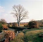 New Forest, Hampshire, Angleterre, Royaume-Uni, Europe