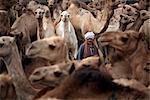 Birqash Camel Market, Cairo, Egypt, North Africa, Africa
