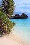 Tanzanie, Zanzibar (île d'Unguja), Kwenda beach, hôtel et mangroves.