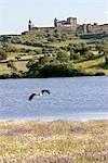 Portugal, Alentejo, Moura, stork