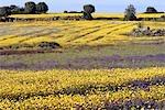 Portugal, Alentejo, field of flowers