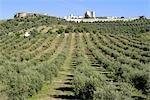 Portugal, Alentejo, Estremoz, fortified village