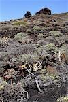 Spanien, Kanarische Inseln, La Palma, Fuencaliente, Vulkan