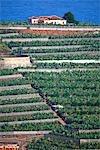 Espagne, Iles Canaries, La Palma, plantations de bananes