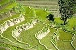 Indonesia, Bali, Amlapura, ricefields