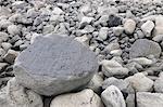 Close-up of Volcanic Stones, Grindavik, Rekjanes Peninsula, Iceland
