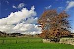 Farmland near Frasertown, Hawke's Bay, North Island, New Zealand