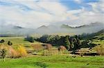 Farmland, near Matawai, Gisborne, North Island, New Zealand