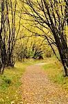 Sentier en automne, Arrowtown, Otago, South Island, Nouvelle-Zélande