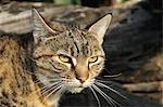 Portrait of Cat, South Island, New Zealand