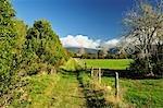 Sentier, Paynes Ford Scenic Reserve, Tasman, South Island, Nouvelle-Zélande