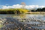 Takaka River, Paynes Ford Scenic Reserve, Tasman, South Island, New Zealand