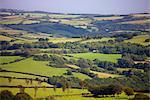 Rouler le paysage vert en été, Parc National d'Exmoor, Somerset, Angleterre, Royaume-Uni, Europe