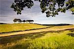 Rolling farmland near Luccombe in Exmoor National Park, Somerset, England, United Kingdom, Europe