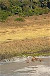 Elefanten in Marsabit-Nationalpark und Reserve, Marsabit District, Kenia