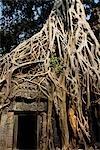 Racines de plus en plus sur les ruines d'Angkor Wat, Cambodge